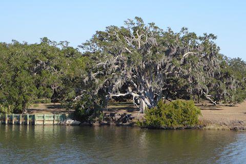 arbre2-640x320